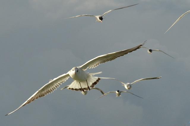 bird-1592587_640