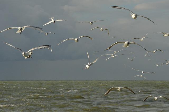 bird-1592558_640